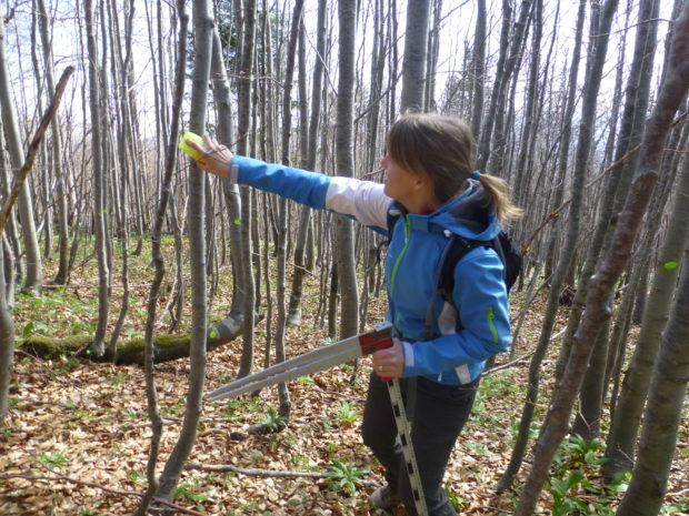 Marking trees for tree ringing in GGE Gotenica