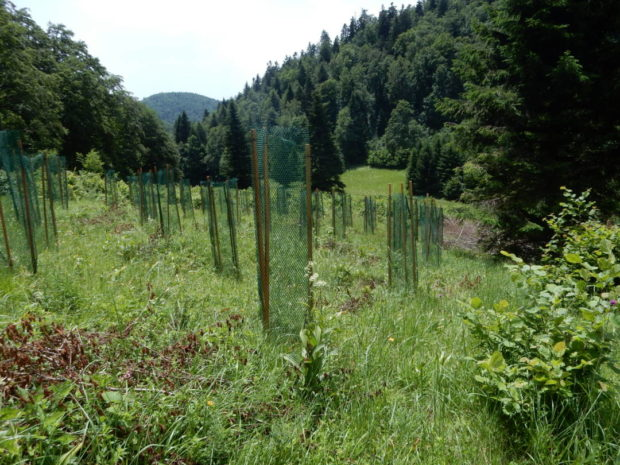 Prehranjevalne ograje zasajene