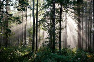 V gozdu, arhiv Občine Kočevje