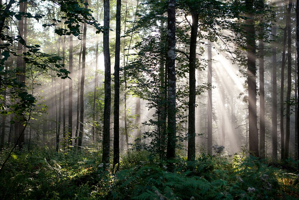 Virgin forests and forest reserves – LIFE Kočevsko
