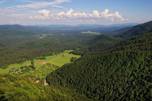 Forest reserves and protective forests in the Kočevje Forest Management area