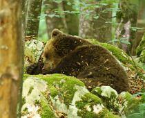 Živalski in rastlinski svet na Kočevskem