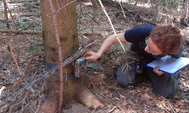 Surveillance of the presence of two target species using camera traps on dust-bathing areas