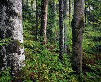 Območje Natura 2000 Kočevsko