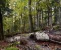 Gozdni rezervati in varovalni gozdovi v Gozdnogospodarskem območju Kočevje
