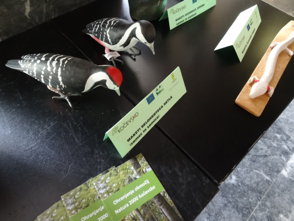 Razstava maket tarčnih vrst in izbranih fotografij javnega fotografskega natečaja KOČEVSKO – SOŽITJE Z NARAVO v prostorih Ministrstva za okolje in prostor v Ljubljani, foto: LU Kočevje