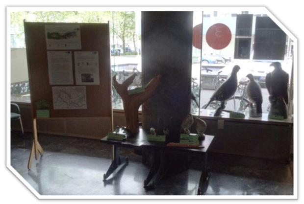 The exhibition of models of target species and of selected photos of KOČEVSKO – COEXISTENCE WITH NATURE open photo competition in the building of Ministry of the Environment and Spatial Planning in Ljubljana