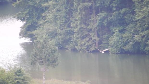 Opazovanje aktivnosti orla belorepca