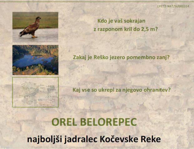 Vabilo na predstavitev najboljšega jadralca Kočevske Reke – Orla Belorepca