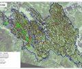 Vzpostavitev mirnih območij (mirnih con) za ogrožene vrste gozdnih kur