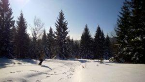 V snegu smo sledili gozdnem jerebu (foto: Arhiv ZRSVN)