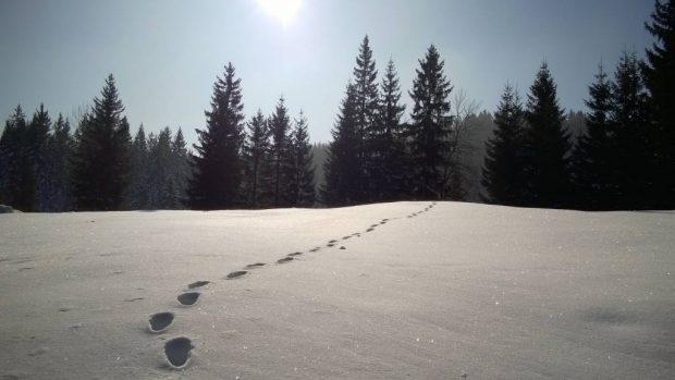 V snegu smo sledili gozdnem jerebu