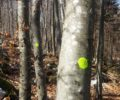 Pole stand thinning started in Kolpa forest management unit