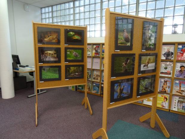 Razstava maket tarčnih vrst in fotografij javnega fotografskega natečaja LIFE KOČEVSKO – SOŽITJE Z NARAVO v prostorih Knjižnice Kočevje