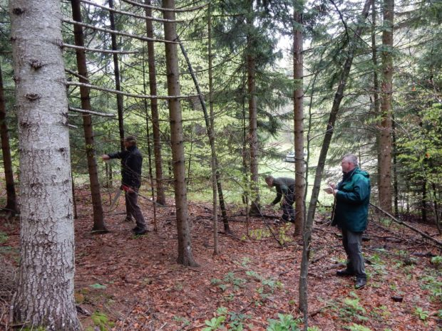 Feeding fences for the western capercaillie