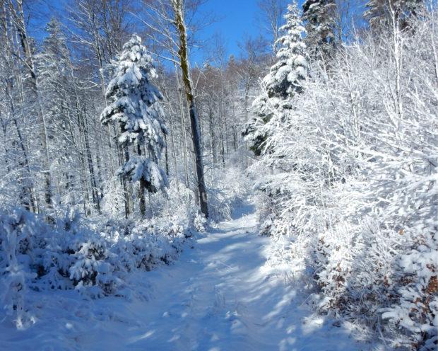 Spremljanje poteka del v državnih gozdovih