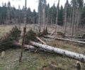 Raging wind causing one of the biggest natural disasters in Kočevsko