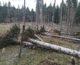 Brutalen obračun narave nad Kočevskimi gozdovi