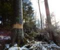 Terenski ogled izvedenih del v gozdovih revirja Planina